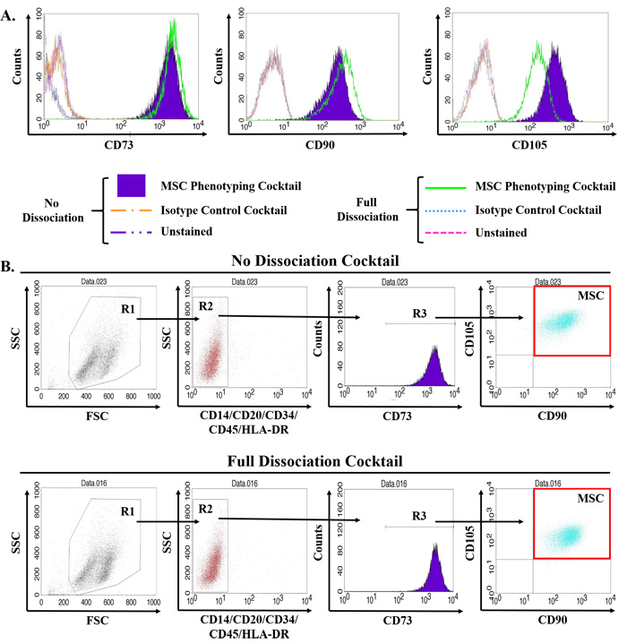 Validation of multiparameter flow cytometry assay to accurately quantify MSCs in primary human tissue.
