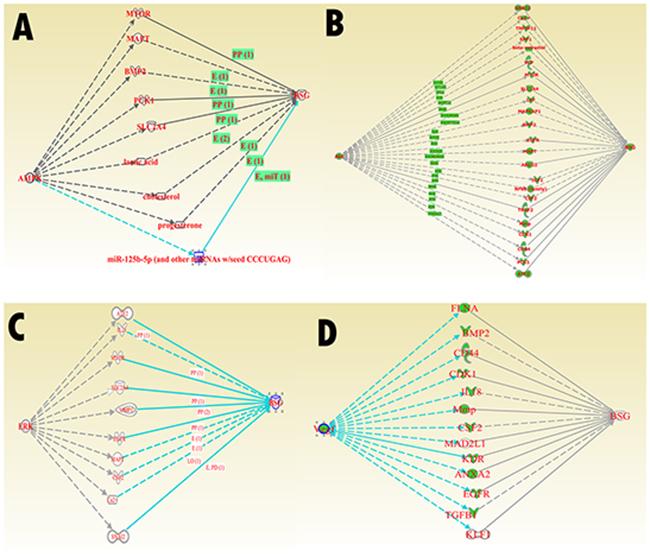 IPA core signaling molecular interaciton with CD147.