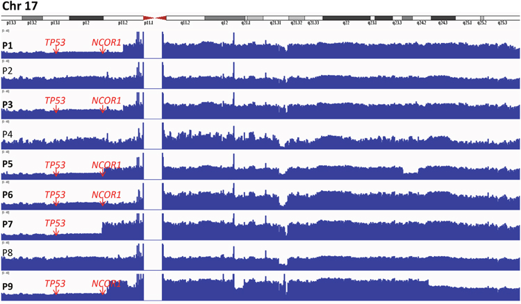 Integrative genomics viewer (IGV) visualization of alignments and coverage of the Illumina reads from the whole genome sequence analysis of 9 SS patients for chromosome 17.