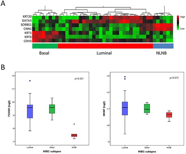 MIBC subclassification of the Chungbuk cohort by Illumina microarray analysis (n=42).