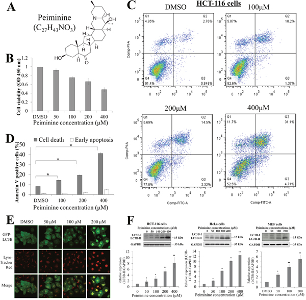 Peiminine inhibits growth and induces apoptosis in HCT-116 cells.