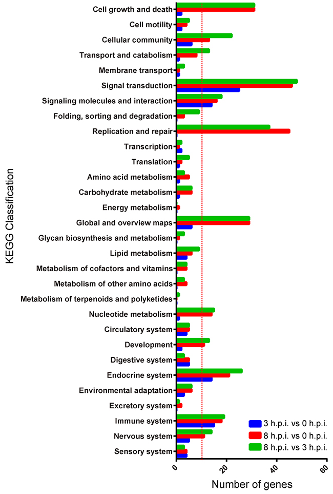 KEGG classifications of differentially expressed genes for the three paired groups.