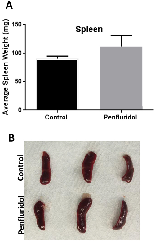 Increase in spleen weight with penfluridol treatment: Spleens from control and penfluridol treated mice were removed and weights of spleens were taken.