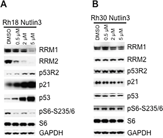 Inhibition of HDM2 by nutlin-3 decreases RRM1 and RRM2 in cancer cells with wild type TP53.