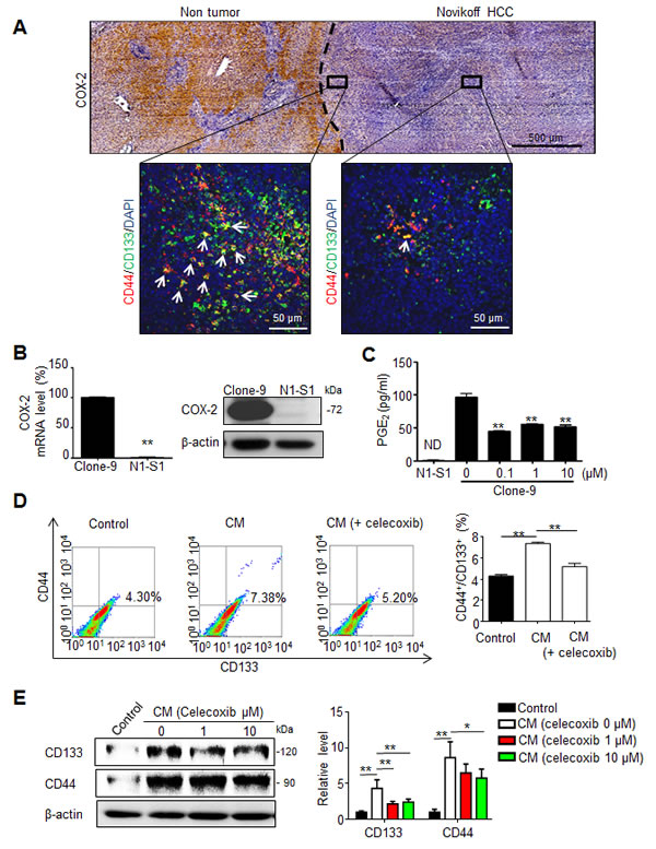 Fig 1: PGE2 from non-tumor tissues enhanced the cancer stemness of Novikoff HCC.