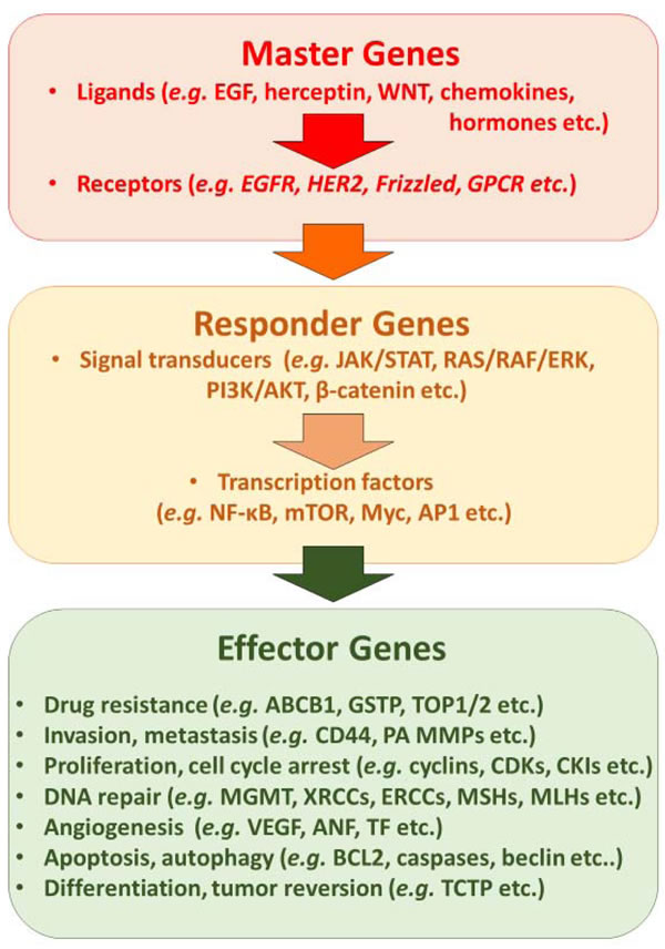Synopsis of main molecular mechanisms that can be targeted by synthetic small molecules, therapeutic antibodies and natural products.