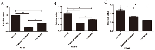 VNP20009 decreases the levels of Ki-67, MMP-9 and VEGF in McA-RH7777 cells assessed by real-time PCR.