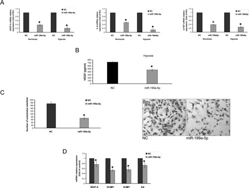 miR-199a-5p inhibits the hypoxia-induction of pro-angiogenic factors and reduces endothelial cells migration.