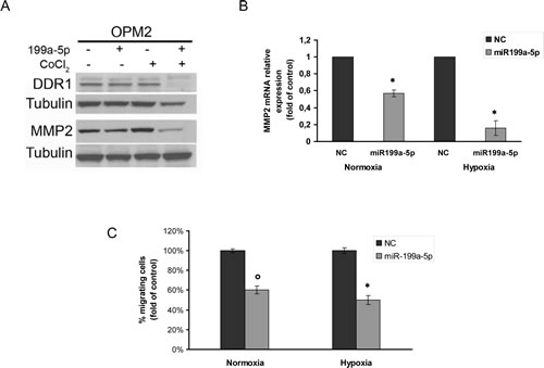 miR-199a-5p regulates DDR1 expression and decreases migration of MM cells.
