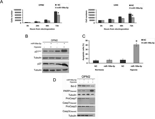 Figure6: miR-199a-5p overexpression reduces proliferation and promotes apoptosis in hypoxic MM cells.