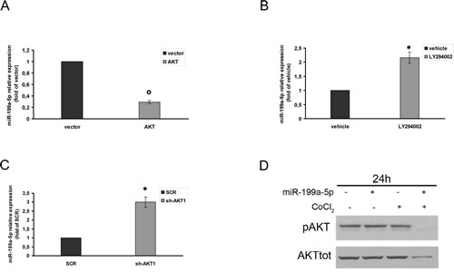 AKT control of miR-199a-5p expression in hypoxic MM cells.