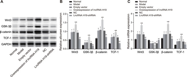 The expressions of Wnt signaling pathway-related proteins in the hippocampus of rats were measured by qRT-PCR and Western blotting.