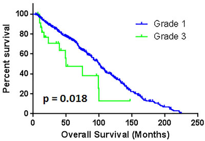 The comparison of overall survival between patients with grade 1 and grade 3.