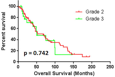 The comparison of overall survival between patients with grade 2 and grade 3.