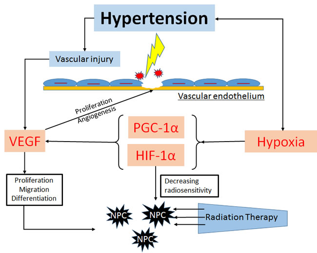 The possible mechanisms of hypertension affect the survival outcome in NPC patients.