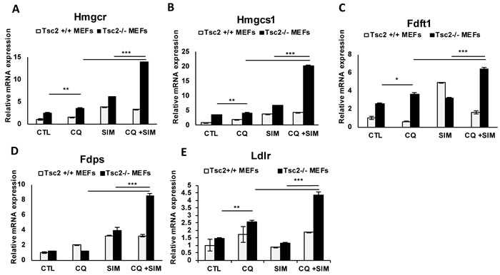 Chloroquine and simvastatin combination treatment upregulates cholesterol homeostasis genes in TSC-2 deficient cells.