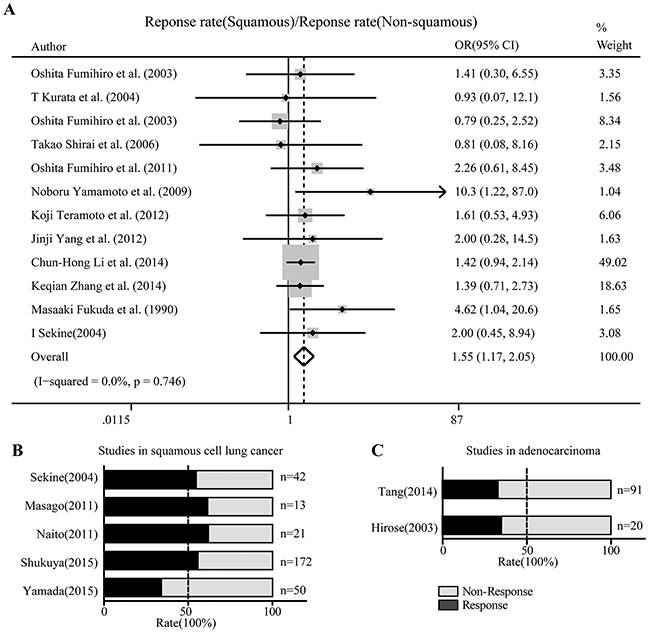 Nedaplatin-based schemes showed superior activity against squamous cell lung cancer than non-squamous cell lung cancer.