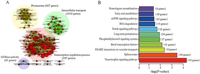 The results of functional enrichment analysis of the five lncRNA co-expressed protein-coding genes.