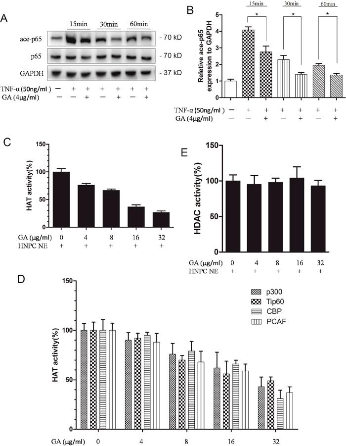 GA suppresses p65 acetylation.