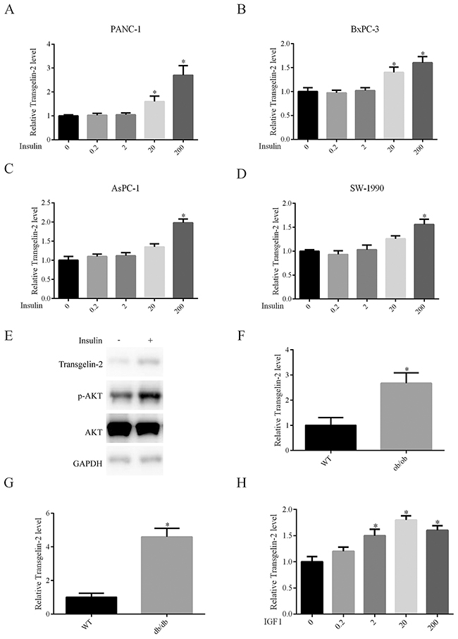 Impact of insulin on transgelin-2 expression.