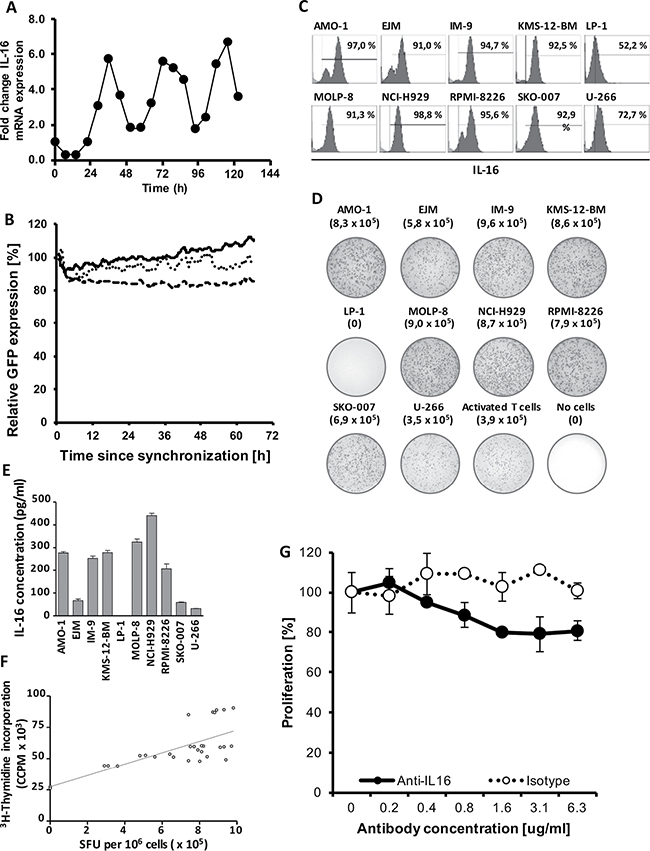 Stable downregulation of oscillating IL-16 mRNA expression.