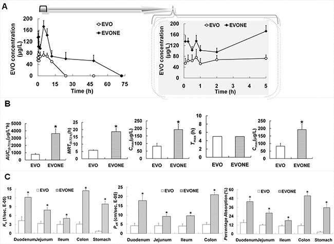 The in vivo kinetic and in situ absorption characteristics of EVONE.