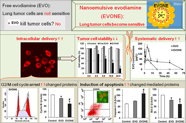 Schematic diagrams of how efficient intracellular delivery make A549 cancer cells sensitive to nanoemulsive EVO with improved bioavailability.