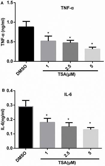 TSA inhibits the production of TNF-α and IL-6 in differentiated THP-1 cells.