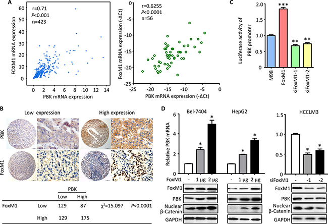 PBK is transcriptionally regulated by FoxM1.