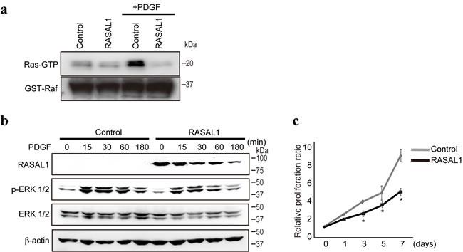 RASAL1 regulates RasGAP activity and proliferation in HSCs.