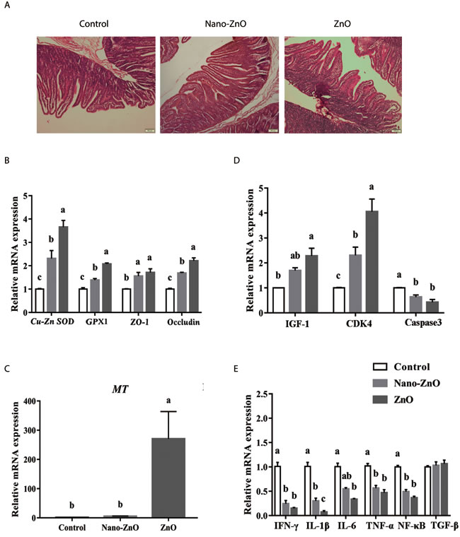 The effects of ZnO treatments on intestinal morphology, and the ralative mRNA expressions of intestinal antioxidant enzymes, tight junction proteins and inflammatory cytokines.