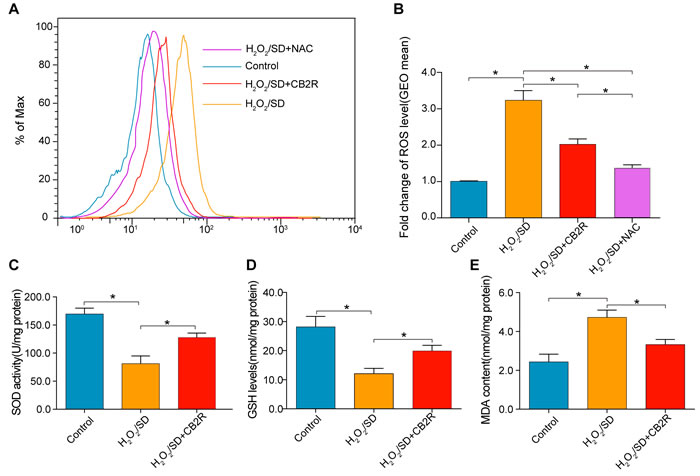 CB2 agonist decreased oxidative stress levels in AD-MSCs subjected to H