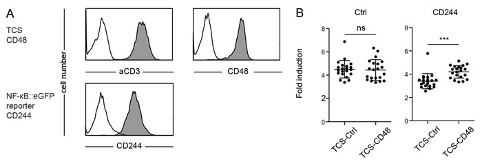 Evaluation of reporter cells expressing CD244.