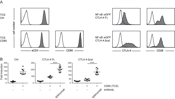 Extrinsic effects of CTLA-4 potently inhibit T cell reporter activation.