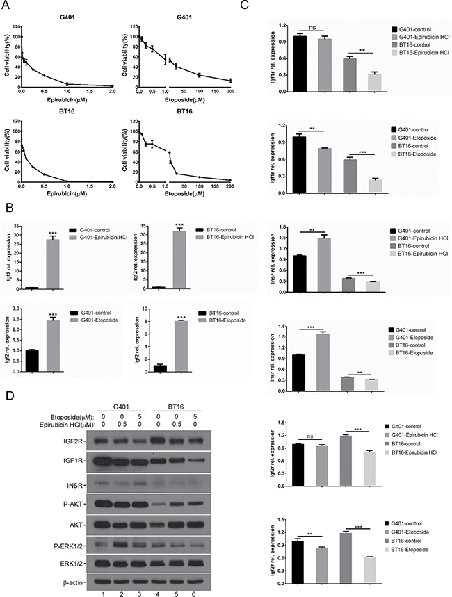 Chemotherapeutic agents induced IGF2 axis dysregulation.