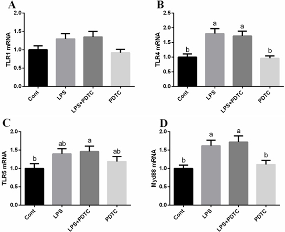 Effects of NF-κB inhibition on TLRs/Myd88 in the lung via RT-PCR.