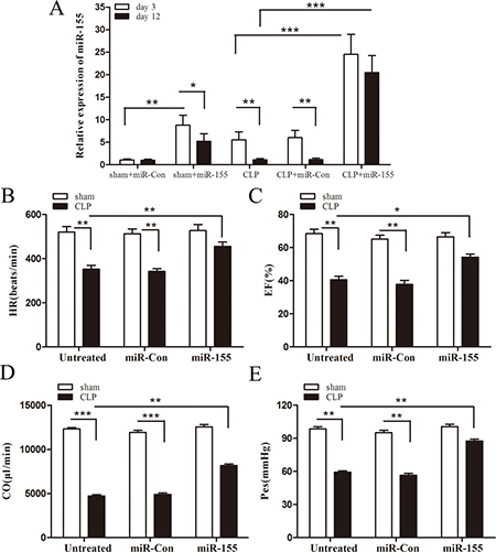 Increased expression of miR-155 in the myocardium attenuates cardiac dysfunction in late sepsis.