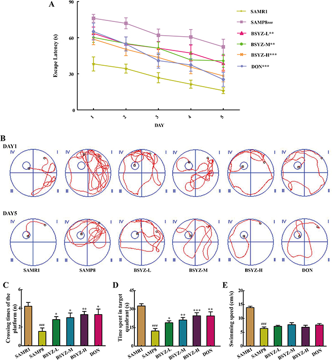 BSYZ ameliorates aging-induced cognitive dysfunction by Morris water maze test in SAMP8 mice.