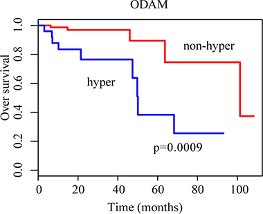 Kaplan-Meier curves for patients grouped based on ODAM methylation.
