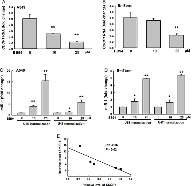 Negative correlation between CDCP1 and miR-1 in lung cancer cells treated with BB94, a broad-spectrum inhibitor of metalloproteases.
