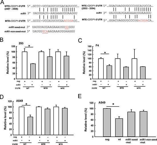 CDCP1 is a target of miR-1.