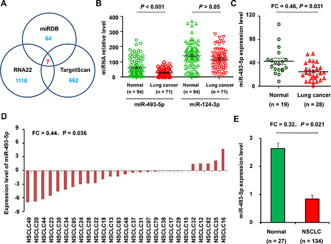 Expression of miR-493-5p in NSCLC and normal samples.