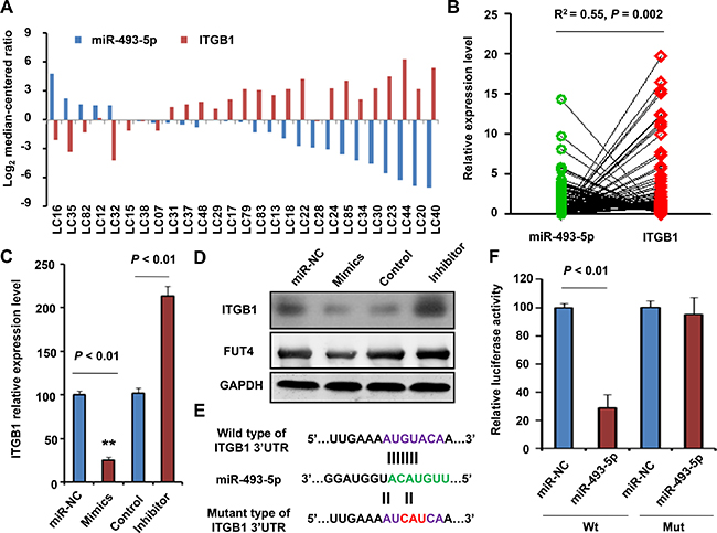 Validation of ITGB1 as a direct target of miR-455-3p.