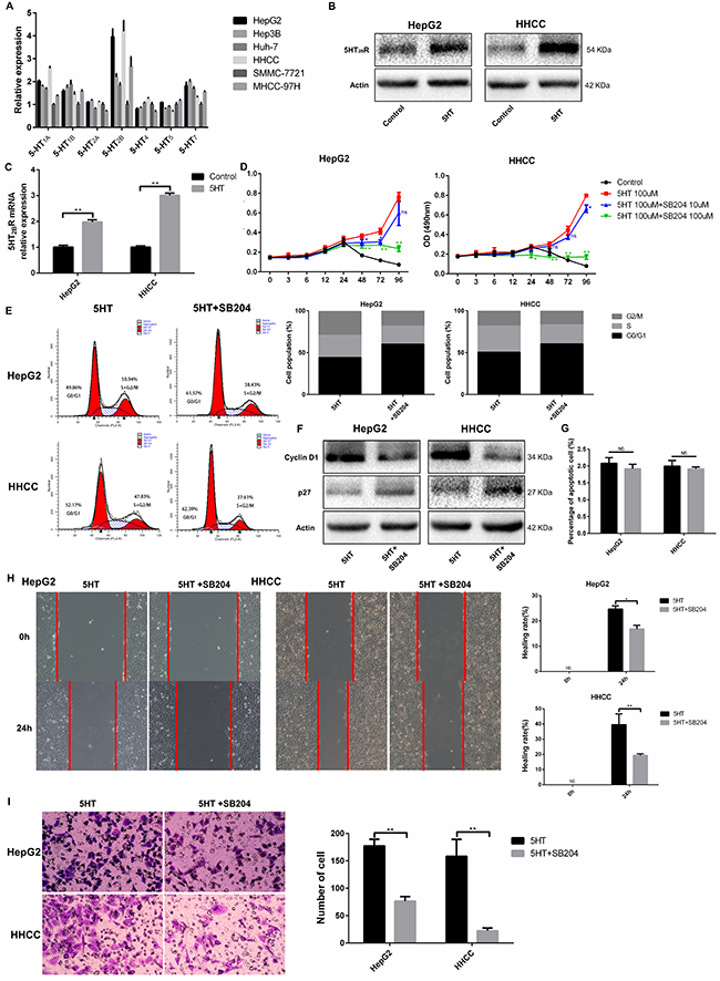 5-HT2BR promoted the proliferation, invasion and metastasis of HepG2 and HHCC cells.