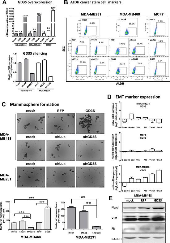Effects of GD3 synthase (GD3S) gene expression on ALDH1 cancer stem cell (CSC) markers, epithelial-mesenchymal transition (EMT) markers, and mammosphere formation ability in three breast cancer cell lines.