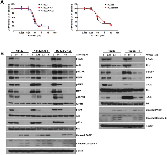 Response to an HSP90 inhibitor in H3122/CR and H2228/TR cell lines.