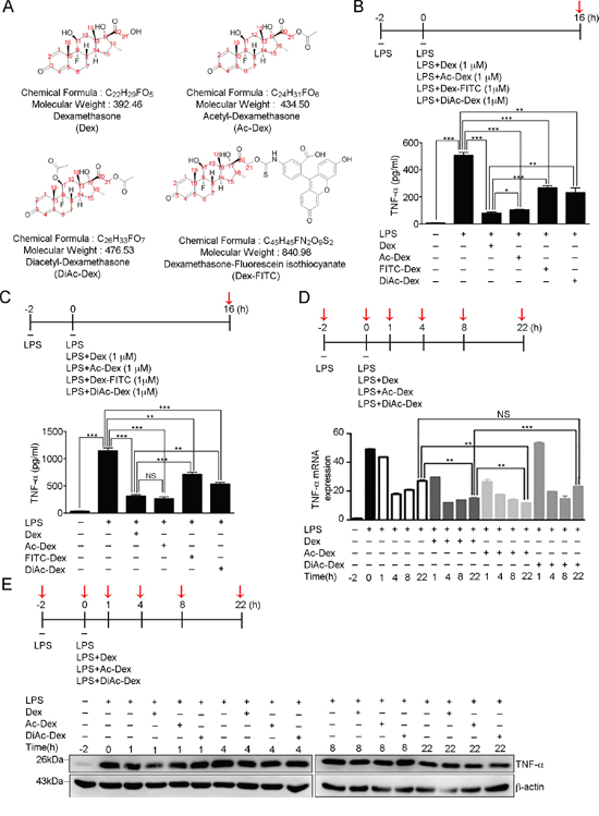 The 11, 21-hydroxyl groups of dexamethasone serve as the functional groups in controlling LPS-induced TNF-α secretion.
