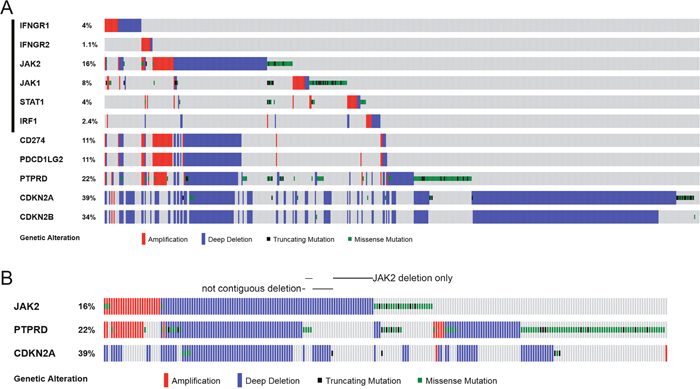 Genetic alterations of IFNγ-IRF1 pathway and selected chromosome 9p genes in cancer cell lines.