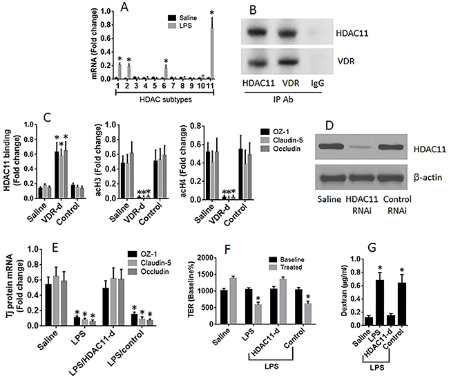 HDAC11 mediates the effects of LPS on suppression of T84 monolayer barrier function.