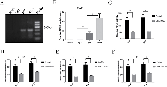NF-κB pathway inhibition reduces HTLV-1- or Tax-induced EGR1 transcription.